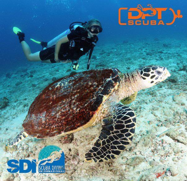 SDI diving turtle dptscuba